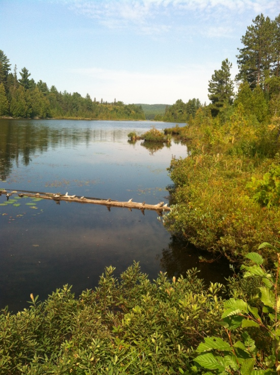 Went on a very short hike in Algonquin Park, makes me want to go back there for a canoe trip!!!  Maybe next summer.